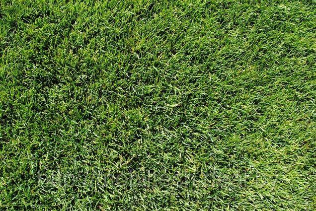 Трава газонная -15% от стоимости