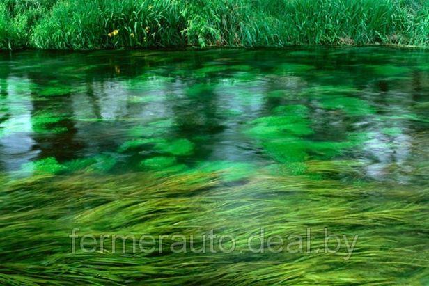 Американцы научились делать новый чудо-материал из водорослей