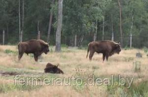 Туристы оставили в национальных парках Беларуси более 56 миллиардов рублей