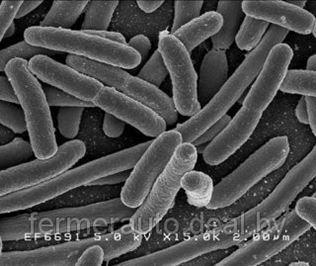 Россельхознадзор обнаружил 'бактерии группы кишечной палочки' в продукции трех белорусских предприятий