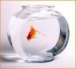 Интерьерные компактные аквариумы